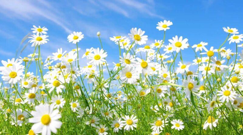 Tu Esti Floarea Din Grădina Versuri